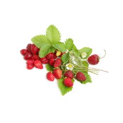 Горски ягоди